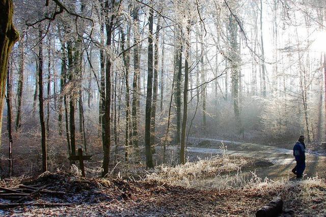 Wald soll weiter Überschuss bringen