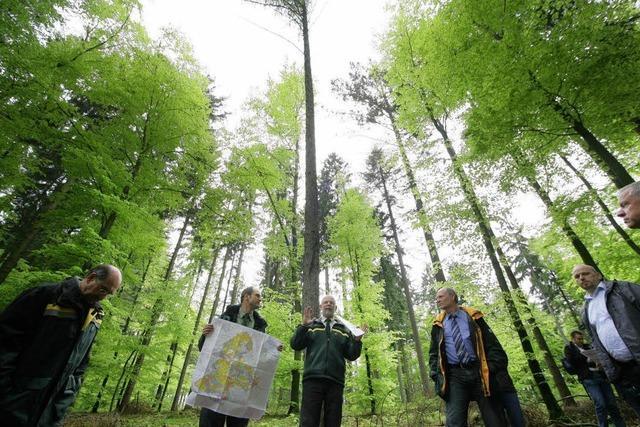 Junger Wald braucht Pflege