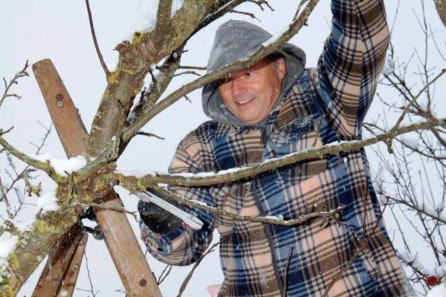 Krögner schneidet Obstbäume