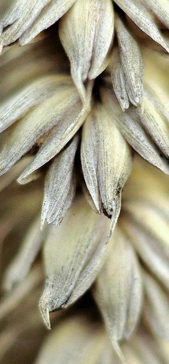 Die Preise für Getreide sind hoch. Das...rte  optimistischer als zuletzt sein.     Foto: dpa