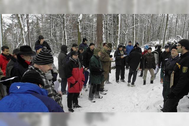 Schnäppchen im Winterwald