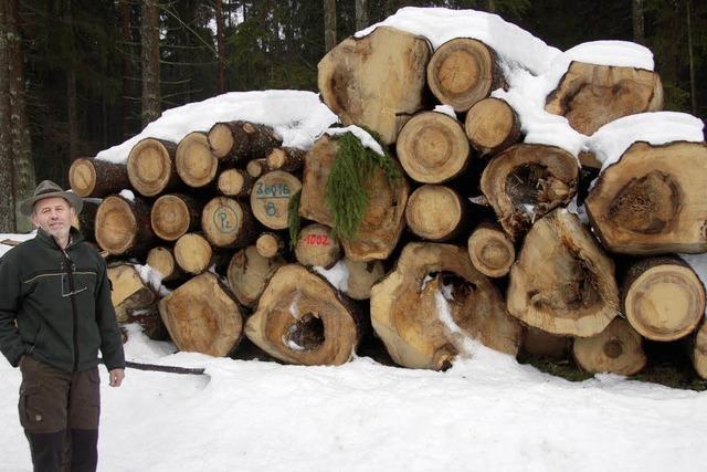Schnee stoppt Holzernte