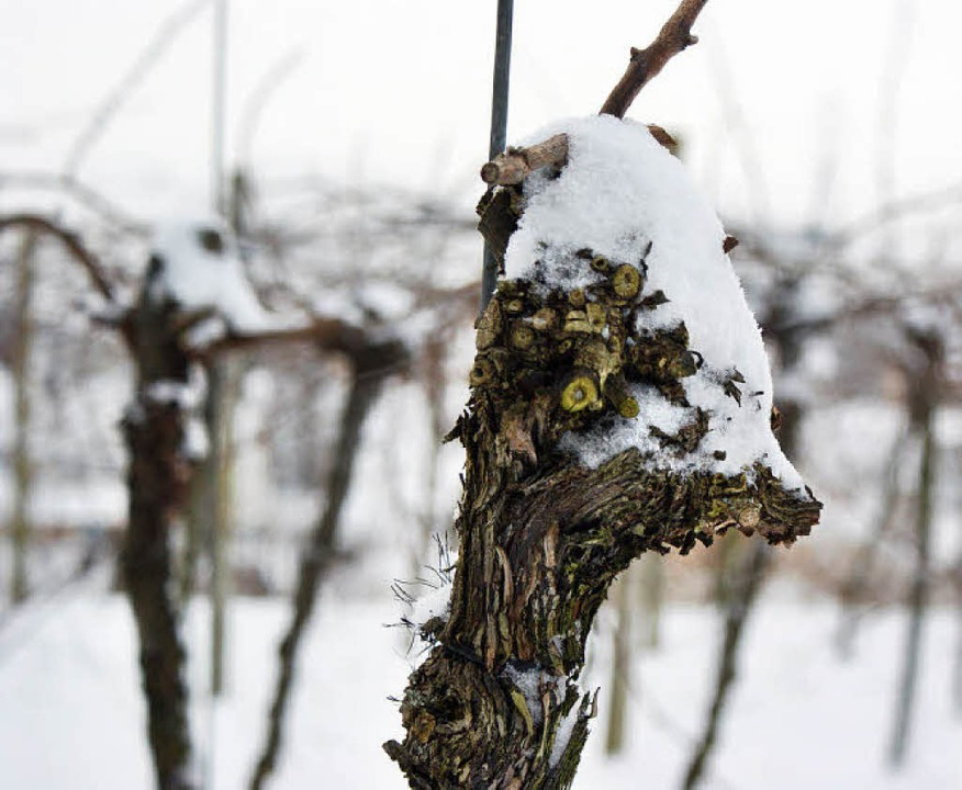 Winterruhe in den Weinbergen der Region.   | Foto: Hans-Jürgen Truöl