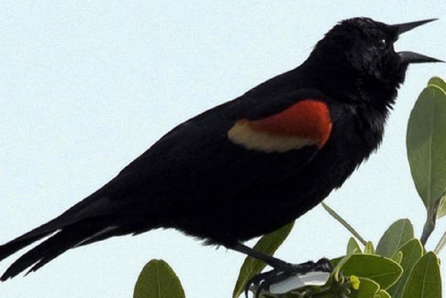 5000 Vögel starben wohl vor Schreck