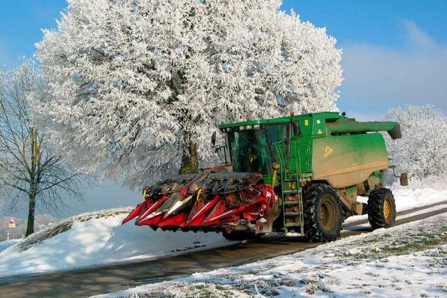 Maisernte bei Schnee und Eis
