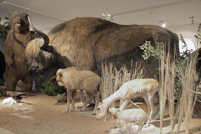 Museum steigert Besucherzahlen