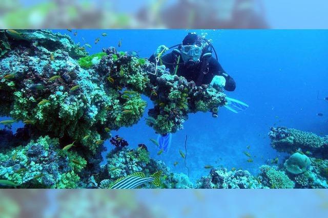 Fasziniert von der Unterwasserwelt