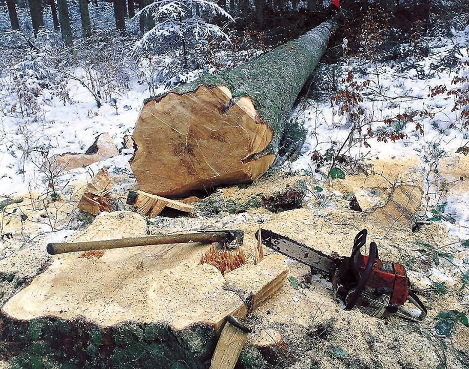 Der derzeit gute Holzpreis hilft auch ...aber nicht gar so tief in den Keller.   | Foto: ddp
