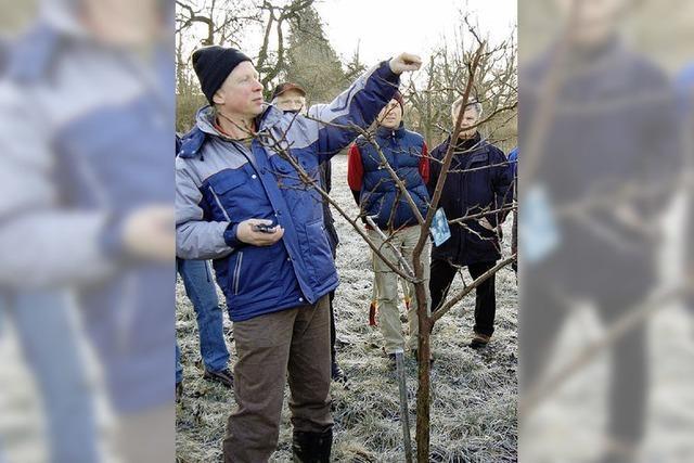 Obstbaumschnitt: Was zu beachten ist