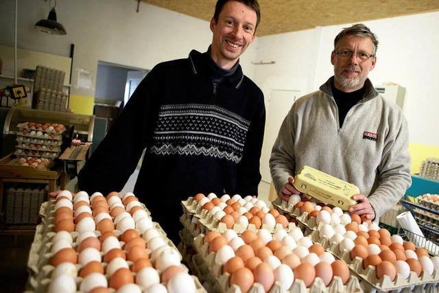 Kein Dioxin in Eiern aus dem Ried