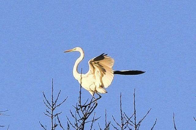 Vogelwelt auf der Baar im Wandel