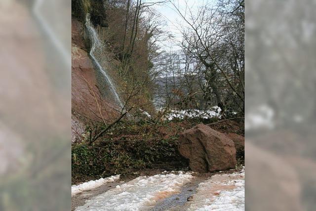 Waldweg im Entegast wird erneut gesperrt