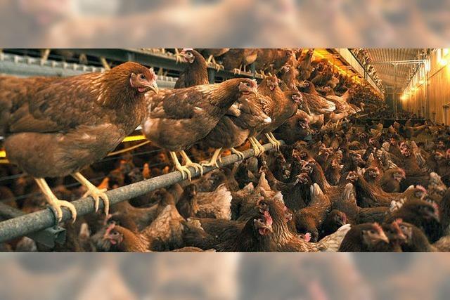 Mit Gentechnik gegen die Vogelgrippe