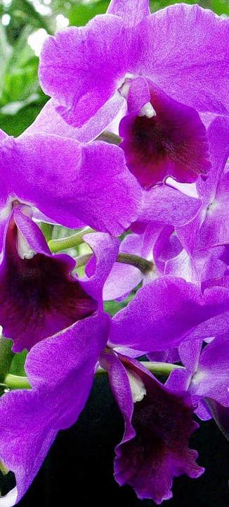 Trendfarbe lila   | Foto: ddp