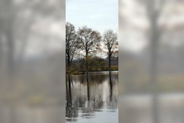 Der Oberrhein ist ein wertvolles Ramsar-Gebiet