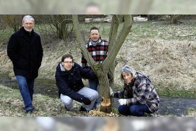 Bäume mögen Biber nur im Winter