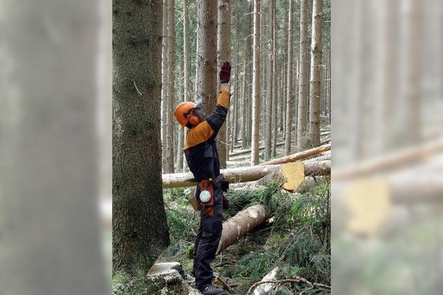 Berufsbild: Im Wald, da sind die ... Forstwirte