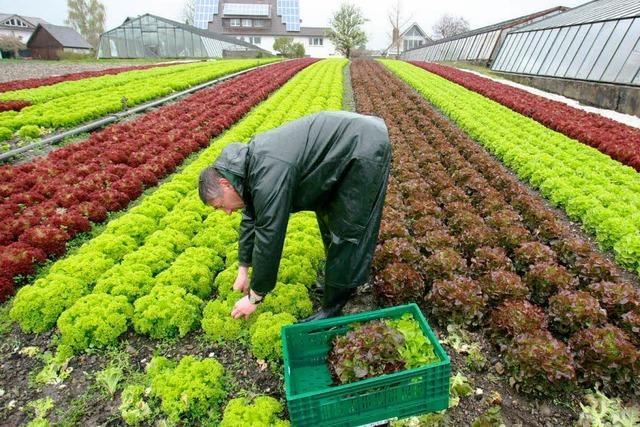 Blei im Gemüse: Landwirte haben mit Altlasten zu kämpfen