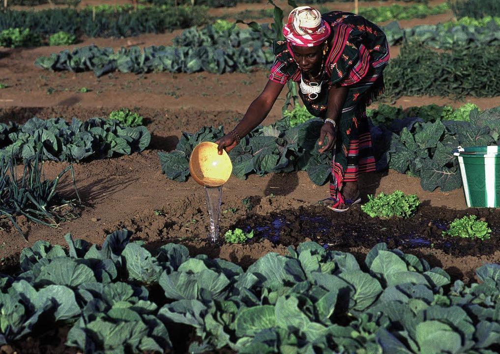 Heimische Bauern in Mali sind durch gr...kte ausländischer Investoren bedroht.   | Foto: R. Razzo/Ciric