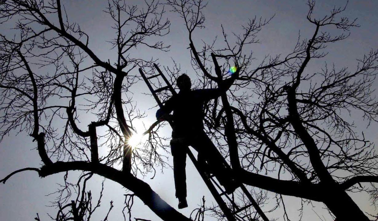 Leerer  Zwetschgenbaum und leere Leite...che Haikus sehen, zeigen Fotos nie.     | Foto: dpa/privat/BZ