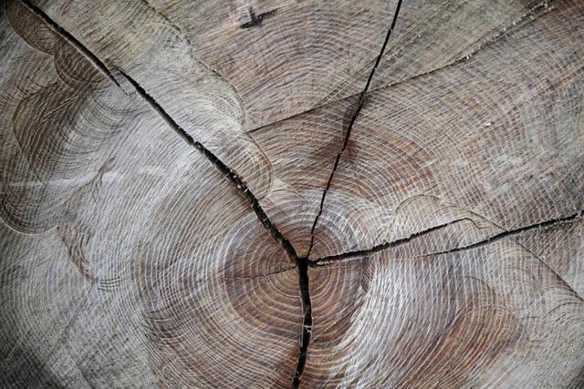 Arbeiter fällen versehentlich 12 Bäume – Stadt pflanzt neue