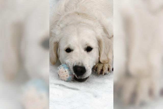 Spaß auf Eis und Schnee mit Schulhündin Senna