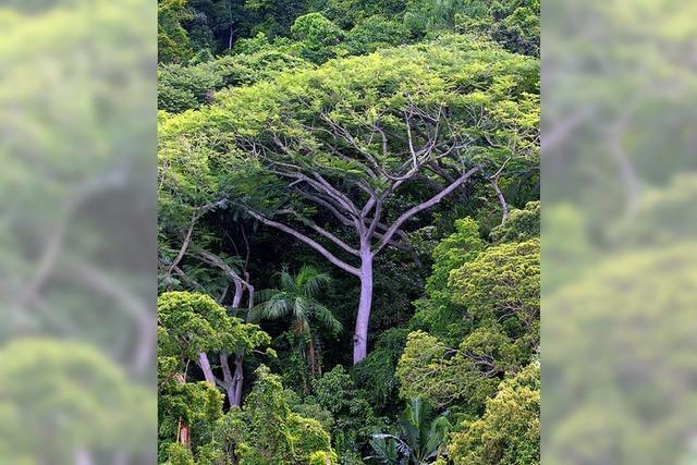 Die Entwaldung trägt zum Klimawandel bei