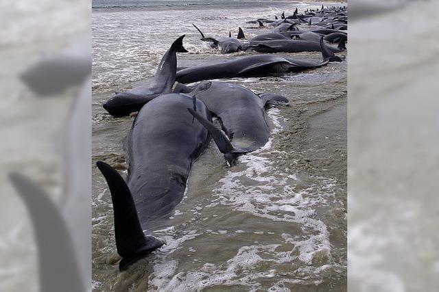 107 Wale in Neuseeland verendet