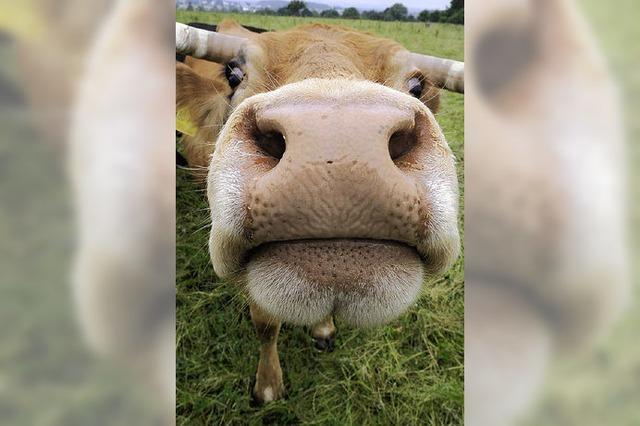 Ziegen billiger, Kühe dagegen teurer