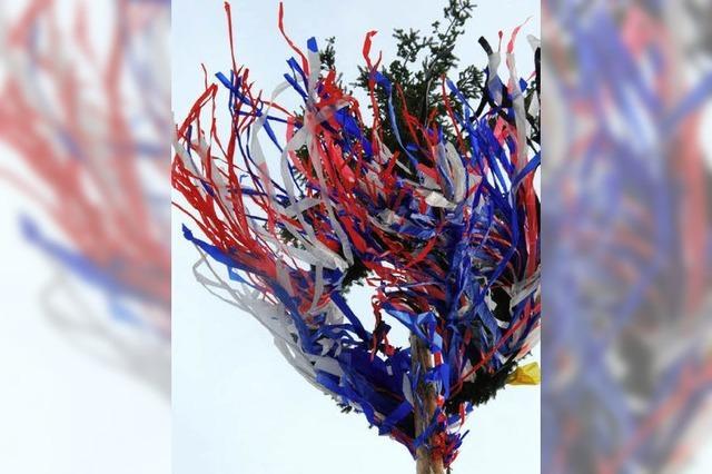 22,50 Meter - ein stolzer Narrenbaum