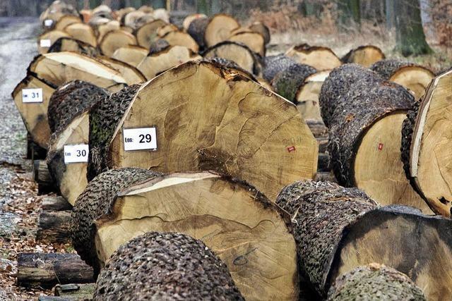 Im Bräunlinger Forst wird Holz zu Geld gemacht