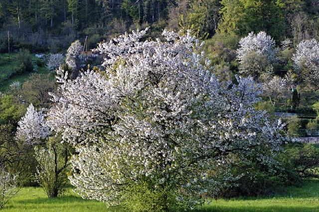 Gemeinde verschenkt 150 Obstbäume