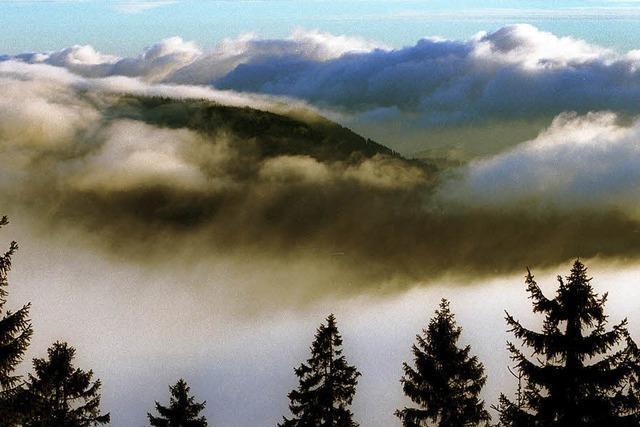 Vorbild Bayerischer Wald
