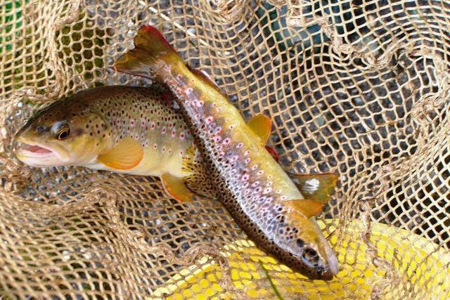 Fischsterben im Doubs – Landwirtschaft schuld?