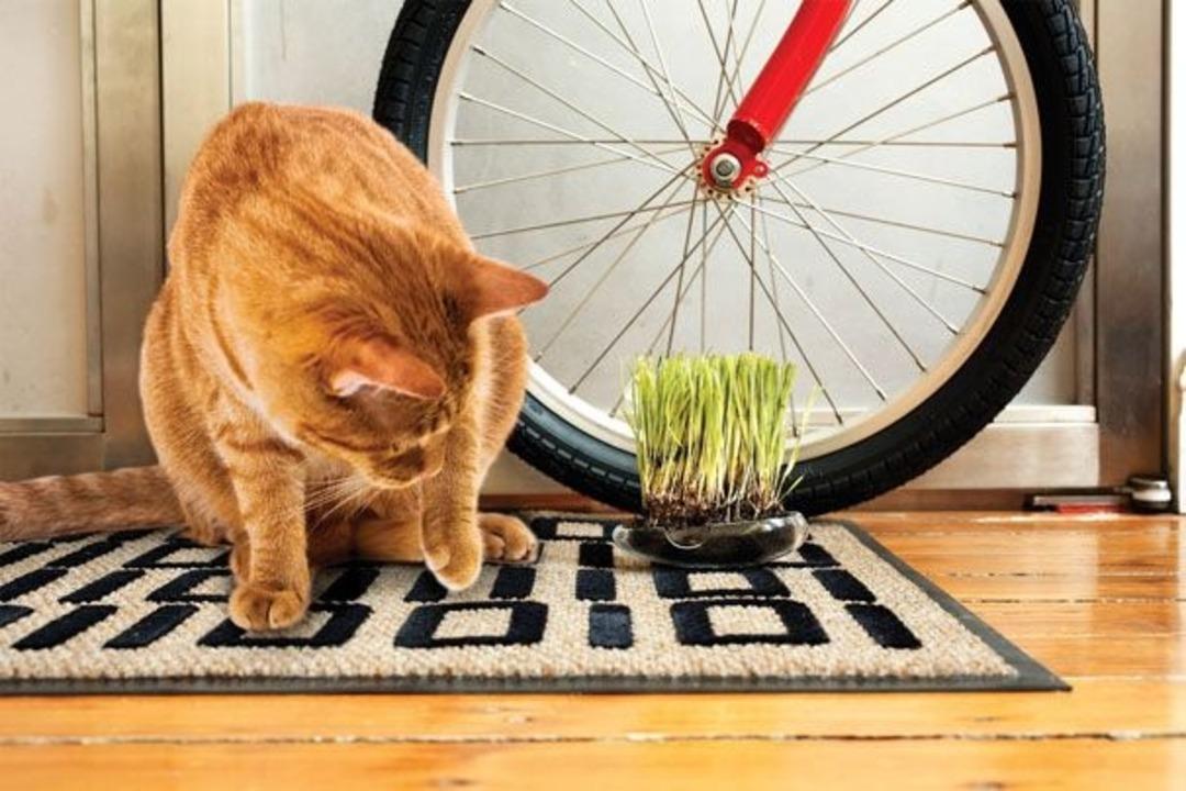 Für die Katze    Foto: IDG