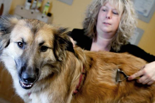 Evis Hundesalon bietet Wellness für Kunden auf vier Pfoten