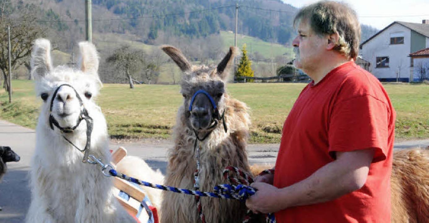 Mit Andentieren anbändeln: Uwe Braun und  seine Lamas Tumolo und Aisha.     Foto: Robert Bergmann