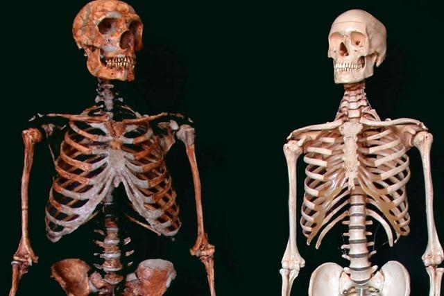 Knochen vor dem Friedhof sorgen für Irritation