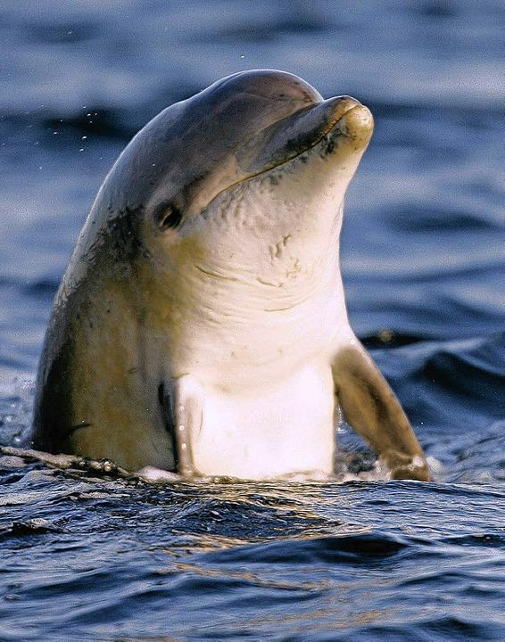 Menschen lieben Delfine – und de...iere nur so aus als würden sie lachen.  | Foto: gms