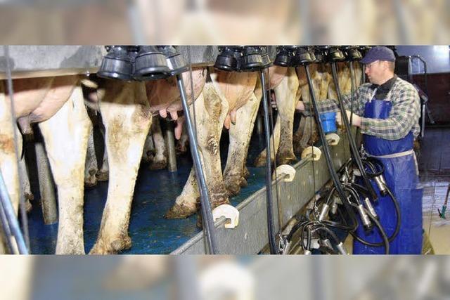 Ein Taxi soll Kühen die Milch liefern