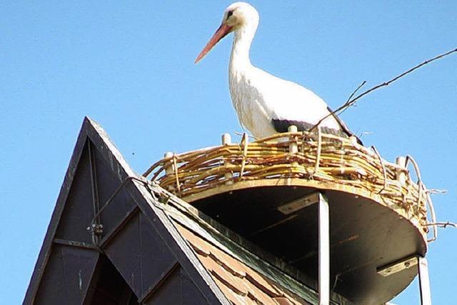 Storch fühlt sich wohl im Nest auf der Kirche