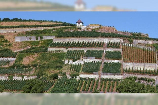 Die EU denkt beim Weinbau um