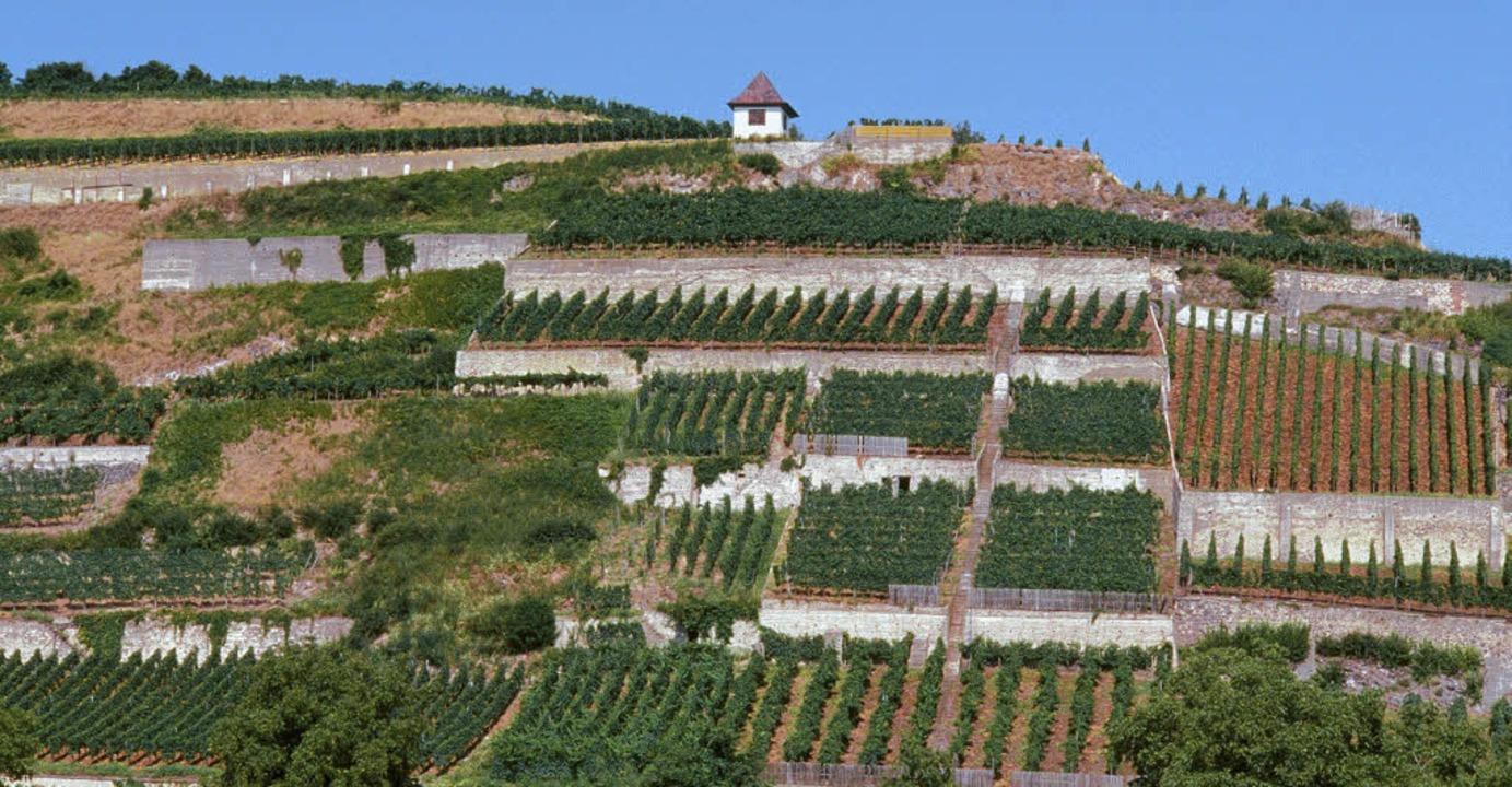 Ohne  Anbaustopp wären Steillagen (hie...et, sagt der Badische Weinbauverband.   | Foto: DWI