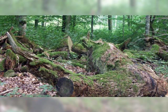 Im Bannwald ein Geotag