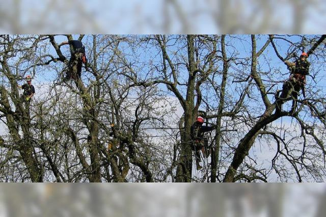Klettern für die Birnen-Rettung
