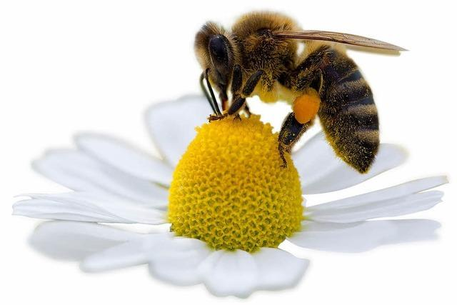 Bienen suchen Imkernachwuchs