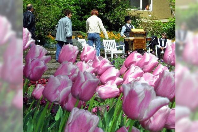 Am Sonntag lockt das Tulpenfest