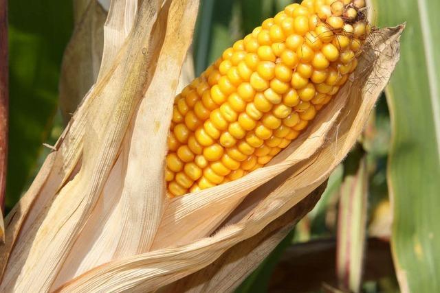 Spannungsfeld: bio oder konventionell?