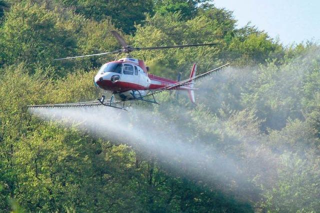 Hubschrauber versprüht Pflanzenschutzmittel gegen die Maikäfer