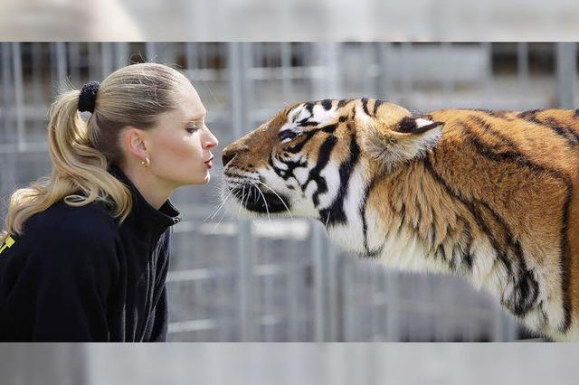 Tigerdompteuse, kubanische Artisten